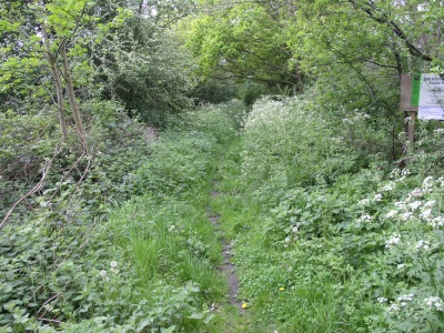 Nature reserve path way